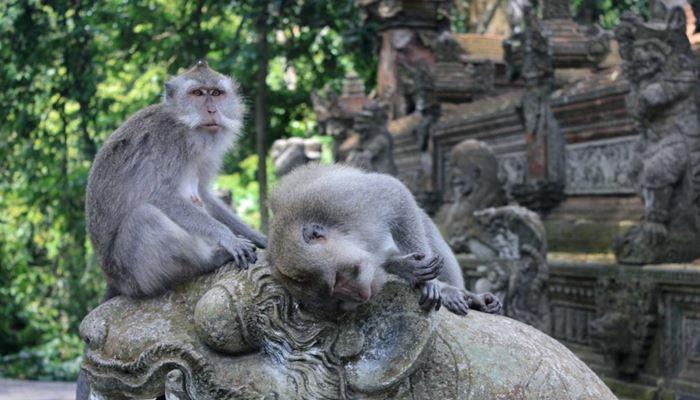Monkey Forest Ubud Bali Sewa Mobil Di Bali First Rent Car